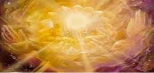 Slunce - květ